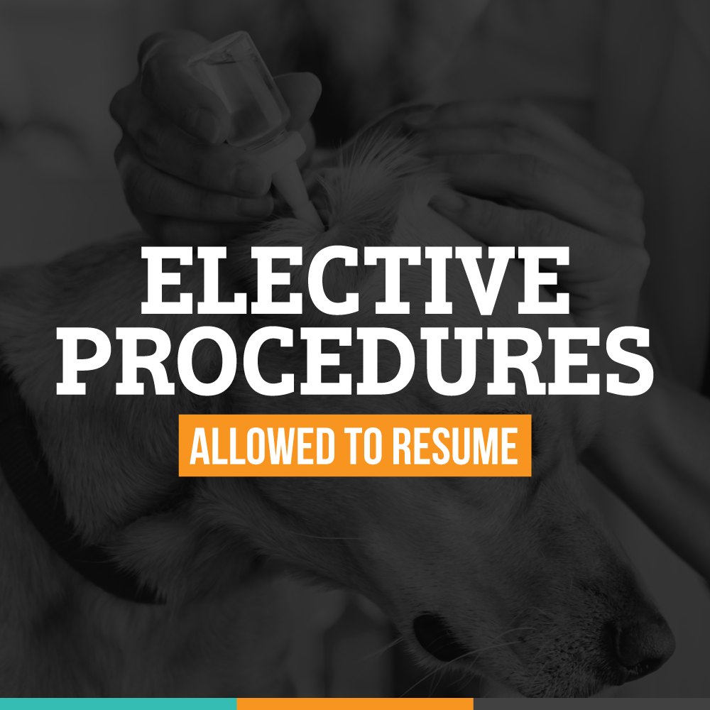 Elective Procedures Allowed to Resume Image