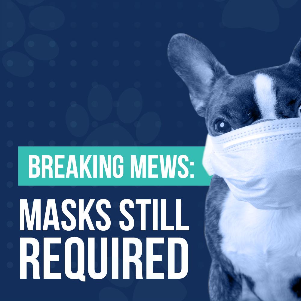 Breaking Mews: Masks Still Required